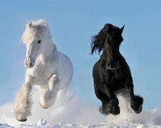 Dünya'da nadir bilinen 10 at cinsi