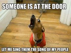 """Dachshund -- """"Someone is at the door.  Let me sing them the song of my people!"""""""
