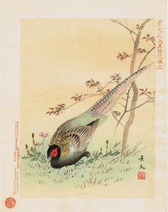 "Japanese Woodblock print, antique, Matsumura Keibun, "" Pheasant"""