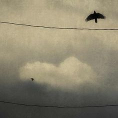 black bird black bird fly away home