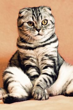 A funny cute cat is sitting #cute #funny #cat #cuteanimals #TheWorldIsGreat