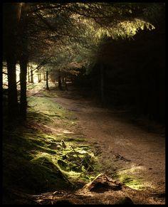 Forest track. (by bingleyman2)
