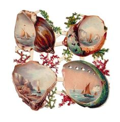 Victorian scrap seashells. (Part of a sheet of die-cut victorian scraps showing sailing boats, seashells and seaweed)