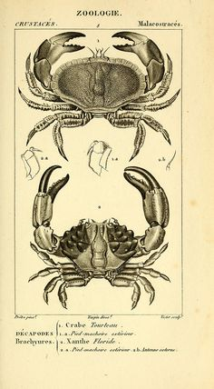 n500_w1150 | by BioDivLibrary