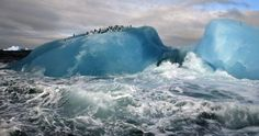 National Geographic - Blue Iceberg: Chinstrap penguins (Pygoscelis antarctica) ride out high surf on blue-ice icebergs near Candlemas Island in the South Sandwich Islands. National Geographic Fotos, National Geographic Wallpaper, Earth Photos, Nature Photos, 1366x768 Wallpaper, Tier Wallpaper, Unique Wallpaper, Amazing Places On Earth, Meteorology