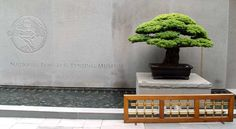 Images from the National Bonsai & Penjing Museum