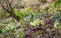 Three outstanding open gardens to visit on Mothering Sunday
