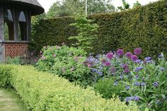 Perennial border behind clipped hedge, May Border, Nicholsons Garden Design and Landscape