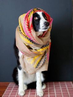 You cant be serious #rescuedog #dog #itsarescuedoglife