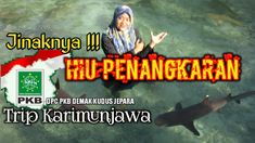 JINAKNYA HIU MENJANGAN BESAR SAAT SELFI BARENG PESERTA TRIP DPC PKB DEMA... Vacation Packages, Youtube, Movies, Movie Posters, Films, Film Poster, Cinema, Movie, Film