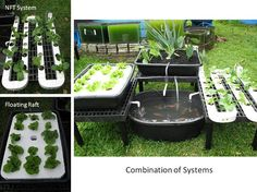 Aquaponics farms