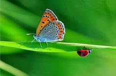 Awe-Inspiring Butterfly Photography