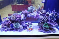 Seahorse Aquarium, Coral Reef Aquarium, Saltwater Aquarium Fish, Saltwater Tank, Marine Aquarium, Nano Reef Tank, Reef Tanks, Reef Aquascaping, Aquarium Sump