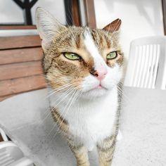 Ce chat est blasé de la vie   Pour la petite histoire ce chat a été élevé par la petite chienne de mes grands-parents !  Elle n'avait jamais eu de chiots mais son instinct maternel était bien là elle le portait prenait soin de lui etc. !  Les animaux sont épatants.  . . . . . #cat#kitty#moustique#moustiquelechat#chat#chaton#love#amour#cute#pet#catsofinstagram#photooftheday#switzerland#suisse#meow#home#kitten#catslover#spring#sun#suisseromande