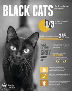 Seattle Humane Society to Celebrate Black Friday by Waiving Adoption Fees for Black Cats