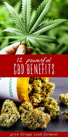 Herbal Remedies CBD and cannabis have become very popular in recent years due to their many medicinal benefits. Learn about 12 powerful CBD benefits for your health! Freezing Lemons, Tomato Nutrition, Stomach Ulcers, Coconut Health Benefits, Types Of Tea, Healthy Oils, Stop Eating, Natural Cures, Natural Health