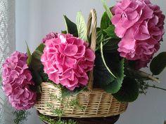 Cistell d'hortensies