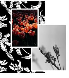 Bold monochromatic floral cut-outs with pops of vibrant colour and over-scaled floral studies in tonal palettes are the inspiration behind this Autumn/Winter Pattern Bank, Monochrome Pattern, Fall Winter, Autumn, Seasons Of The Year, Winter Trends, Red Roses, Color Pop, Vibrant Colors