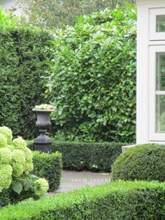 green, the most important color in your garden