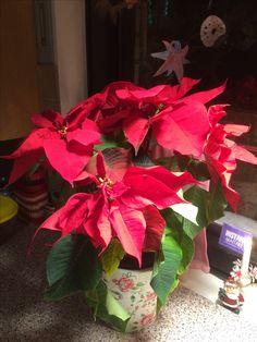Joulutähti Plants, Plant, Planets