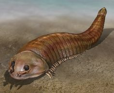 Fuxianhuia is a close relative of living arthropods such as insects. Copyright Quade Paul. Fuxianhuia protensa is a Lower Cambrian fossil arthropod known from the Chengjiang fauna in China. Its purportedly primitive features have led to its playing a pivotal role in discussions about the euarthropod stem group. Nevertheless, despite being known from many specimens, disputes about its morphology, in particular its head appendages, have made it one of the most controversial of the Chengjiang…