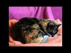 Yaaawwwn!! It's a cat-nap time...