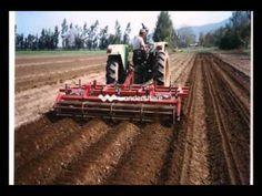 Las principales técnicas de cultivo del maíz. - YouTube