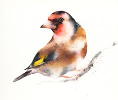 Goldfinch painted by watercolour artist Jane Davies