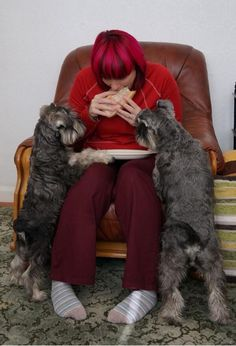 Love this ...like my friends schnauzers...live to eat.... (...I ended up with a schnauzer who's not a foodie!!!)
