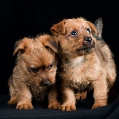 Rare, Super Cute Dog Breeds | PetBreeds