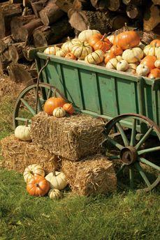 just sooooooooo addicted to pumpkins!!!!