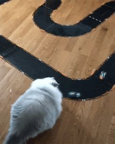 When kitty wants to play but he is too lazy after he gets treat