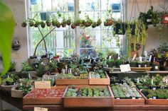 Paxton Gate  {In Which We Covet Unicorns, Succulents, Taxidermy & Rare Books}