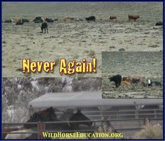 Images from an area of drought where livestock interests united against wild horses creating the NACO legal action. note: NACO lost in federal district court and is appealing in the Ninth Circuit