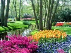 Keukenhof Gardens, Netherlands - 80 acres of beautiful flowers- I can't wait to go and visit again! It's so beautiful! Beautiful Flowers Garden, Beautiful Gardens, Pretty Flowers, Amazing Gardens, Tulips Garden, Amsterdam City, Amsterdam Netherlands, Holland Netherlands, Spring Sign