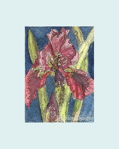 Dark Reddish Iris ACEO from Theodora Winter by THEODORADESIGNS, $7.00