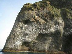 A fantastic cliff modelled by natural forces.  Elephant Rock, Heimaey, Vestmannaeyjar (The Westmen Islands), Iceland