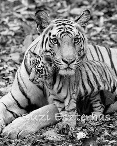 BABY TIGER and MOM Photo, 8 X 10 Black and White Print, Baby Animal Photograph, Wildlife Photography,  Nursery Art, Safari, Kids Room