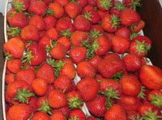 Sugar Free Strawberry Freezer Jam