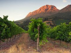 Vineyard and views from Aaldering Wines. Hothouse Marketing client Fine Drinks exclusively represents Aaldering Wines in the UK, exceptional wines from South Africa. Cap Town, Destinations, Le Cap, Belle Villa, African Safari, Kid Friendly Meals, South Africa, Vineyard, Country Roads