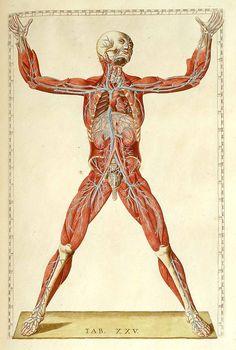 Romanae archetypae tabulae anatomicae novis... by Bartolomeo Eustachi and Giulio de'Musi, 1783