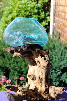 Rustic Hand Blown Glass Terrarium Fish Bowl Vase Driftwood