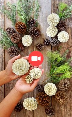 """Make beautiful """"bleached pinecones"""" in 5 minutes without bleach! Non-toxic & easy DIY craft, perfect for fall, winter, Thanksgiving & Christmas decorations! for christmas table easy diy Easiest 5 Minute 'Bleached Pinecones' {without Bleach! Easy Christmas Decorations, Pine Cone Decorations, Christmas Diy, Christmas Wreaths, Pinecone Christmas Crafts, Decorating With Pine Cones, Rustic Christmas, Christmas Pine Cones, Table Centerpieces For Christmas"""