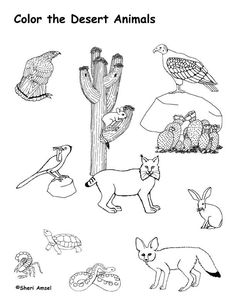 Color the Desert Landscape Worksheets Deserts and Landscaping