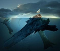 Photo Manipulation Art is used to combine selected elements for making attractive images by applying artistic abilities. Today's post is surreal photo manipulation. Beautiful Dream, Beautiful World, Photomontage, Different Points Of View, Surreal Photos, Photo D Art, Surrealism Photography, Photo Manipulation, New Art