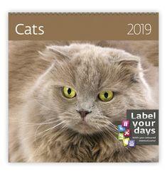 Nástěnný kalendář LP CATS 2019 Cats, Lp, Gatos, Kitty Cats, Cat, Kitty, Serval Cats, Kittens