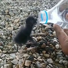 Thirsty bird's baby - Tiere - Adorable Animals Cute Funny Animals, Cute Baby Animals, Animals And Pets, Cute Dogs, Cute Babies, Nature Animals, Beautiful Birds, Animals Beautiful, Cute Animal Videos