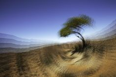Colla's Tree Richtersveld, Kim Stevens