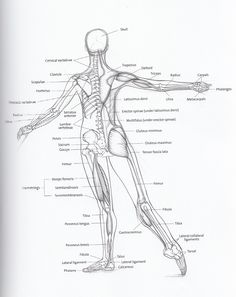 dancer's anatomy - Google Search