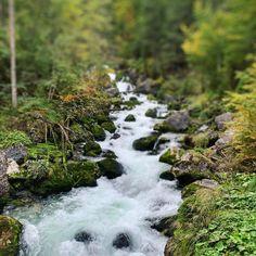 #dachsteinkoenig #fluss #river #bach #wald #forest #wanderung #herbstwanderung #hiking #natur #nature #familienurlaub #familie #urlaub #holiday #family #austria #österreich
